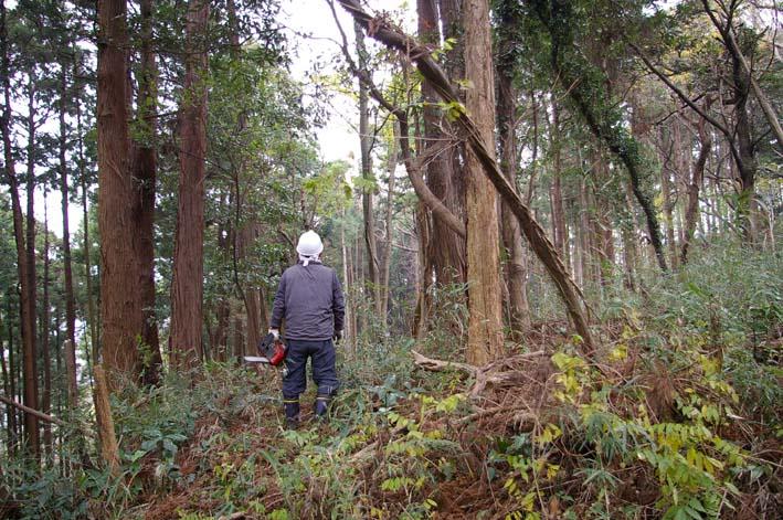 六国見山森林公園の夫婦桜近くを臨時手入れ(12・8)_c0014967_9245516.jpg