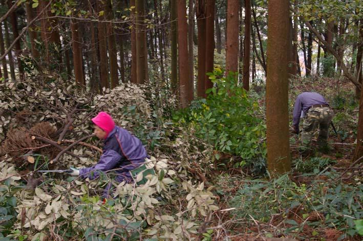 六国見山森林公園の夫婦桜近くを臨時手入れ(12・8)_c0014967_9255934.jpg