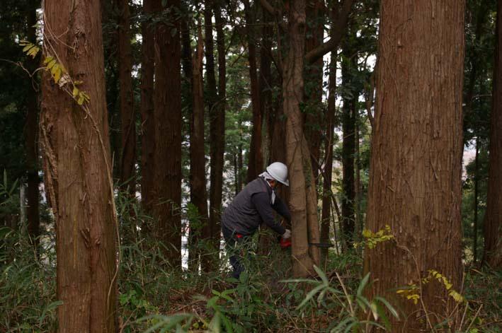 六国見山森林公園の夫婦桜近くを臨時手入れ(12・8)_c0014967_925925.jpg