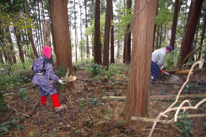 六国見山森林公園の夫婦桜近くを臨時手入れ(12・8)_c0014967_9262148.jpg