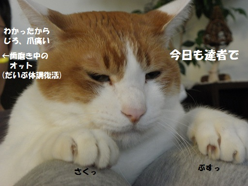 e0216469_8563932.jpg