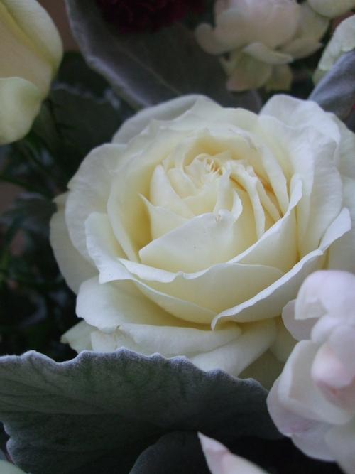 オークリーフ(お悔やみのお花)_f0049672_18464363.jpg