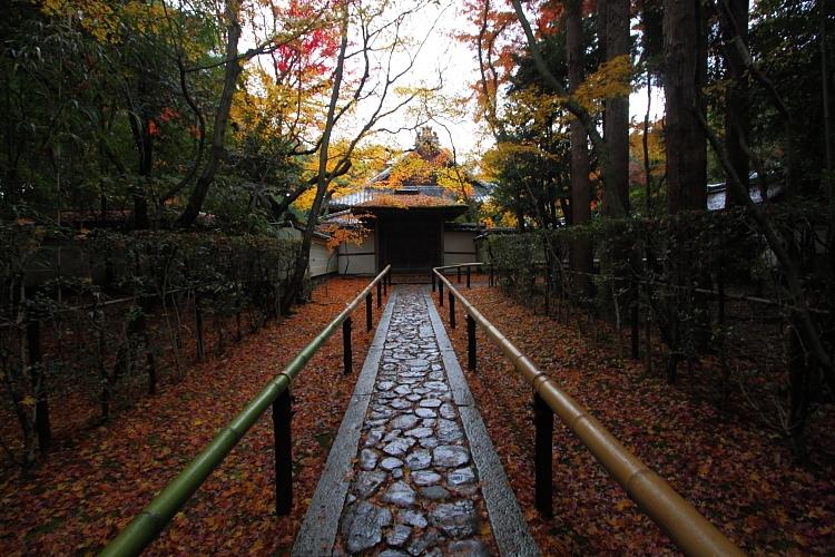 高桐院(大徳寺塔頭)_e0051888_055157.jpg