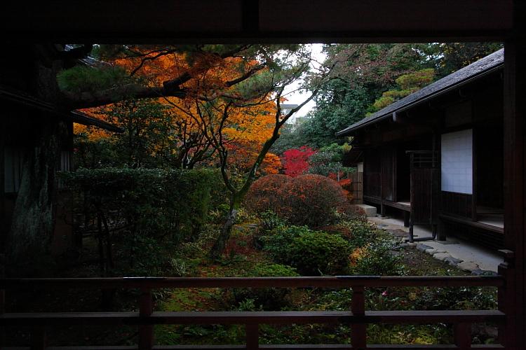 高桐院(大徳寺塔頭)_e0051888_0552014.jpg