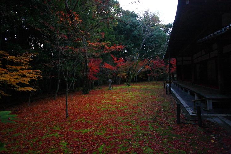 高桐院(大徳寺塔頭)_e0051888_0593967.jpg