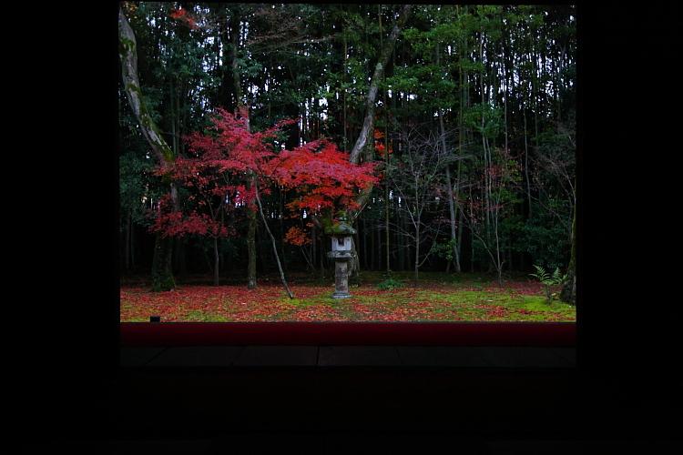 高桐院(大徳寺塔頭)_e0051888_14246.jpg