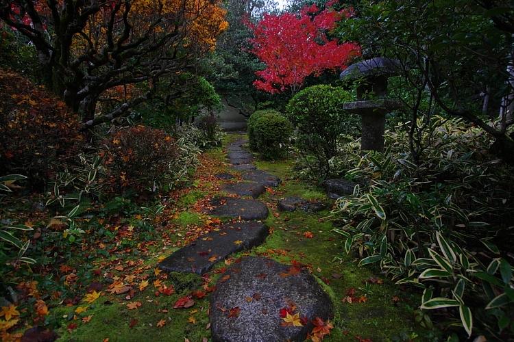 高桐院(大徳寺塔頭)_e0051888_143135.jpg
