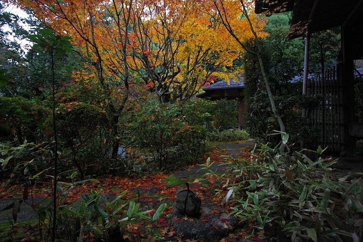 高桐院(大徳寺塔頭)_e0051888_144885.jpg