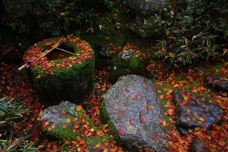 高桐院(大徳寺塔頭)_e0051888_151045.jpg