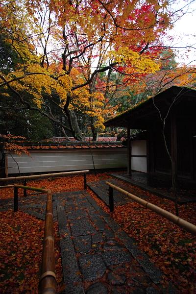 高桐院(大徳寺塔頭)_e0051888_155152.jpg