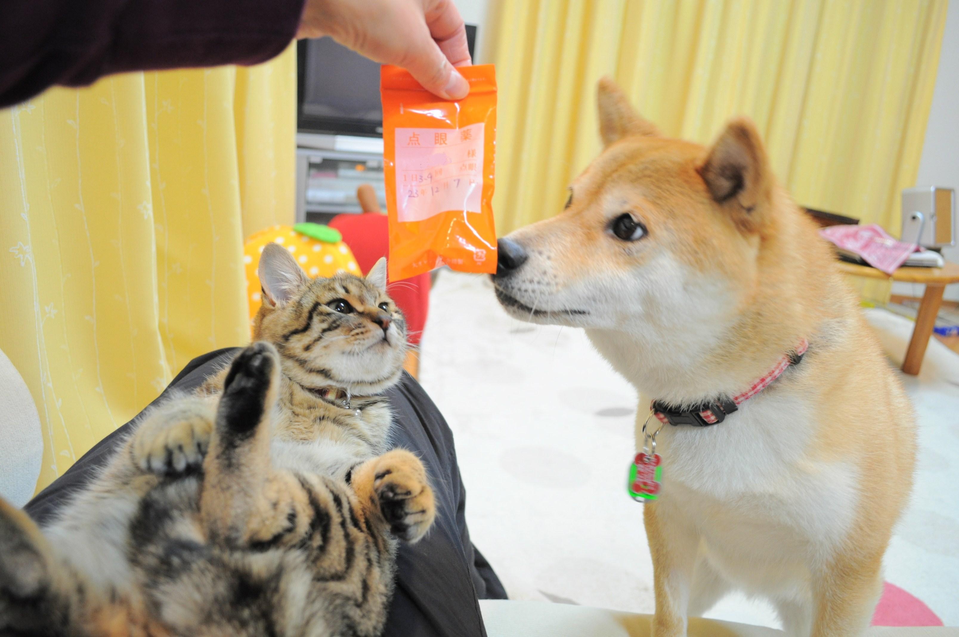 お薬ゴックン!_a0126590_5281516.jpg