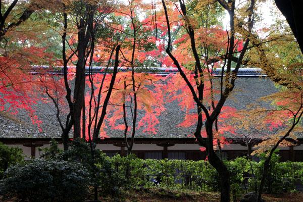上賀茂神社 紅葉終幕_e0048413_15554634.jpg