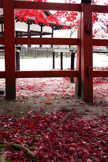 上賀茂神社 紅葉終幕_e0048413_15565370.jpg