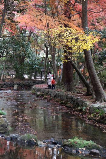 上賀茂神社 紅葉終幕_e0048413_1556949.jpg