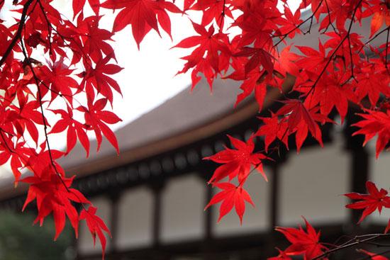 上賀茂神社 紅葉終幕_e0048413_1557862.jpg