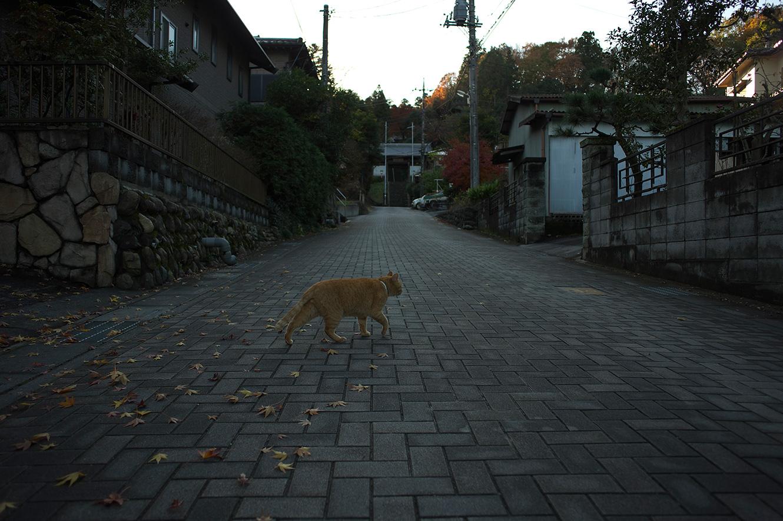 散歩道_f0121181_056143.jpg