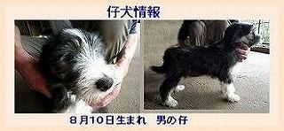 広子ちゃんです_f0211789_19204334.jpg