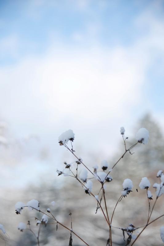 雪をもらって_f0091207_0191559.jpg
