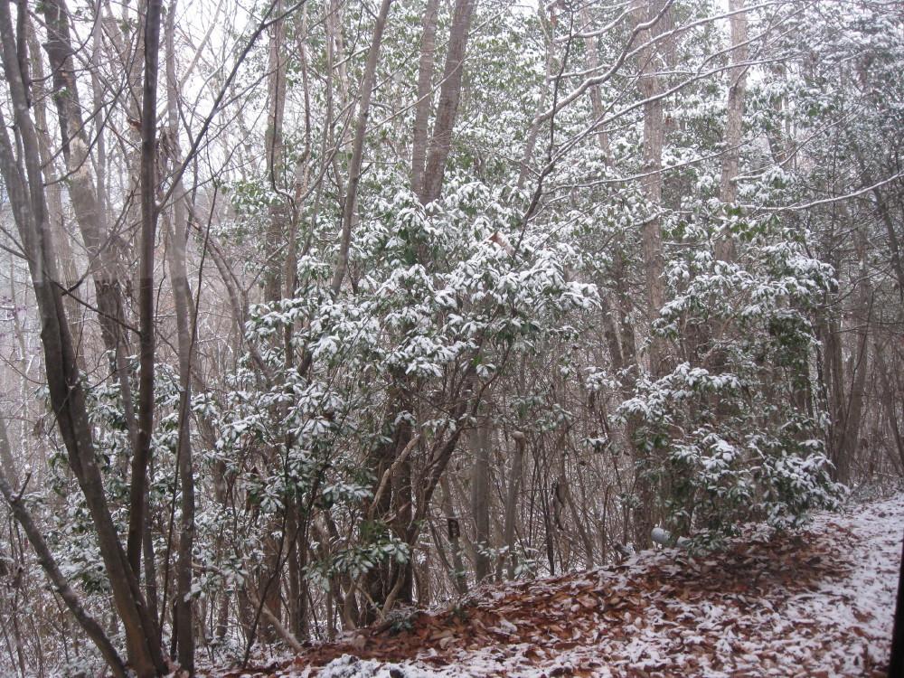 初雪_c0218213_1874599.jpg