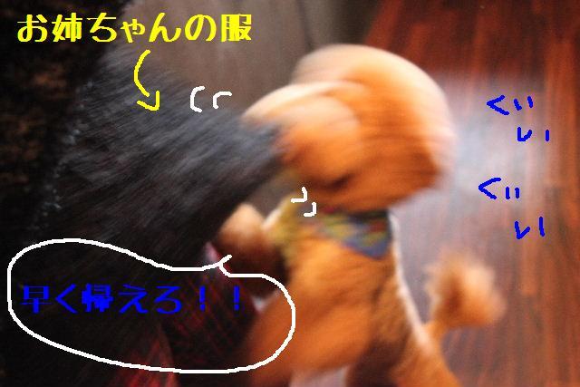 b0130018_1318199.jpg