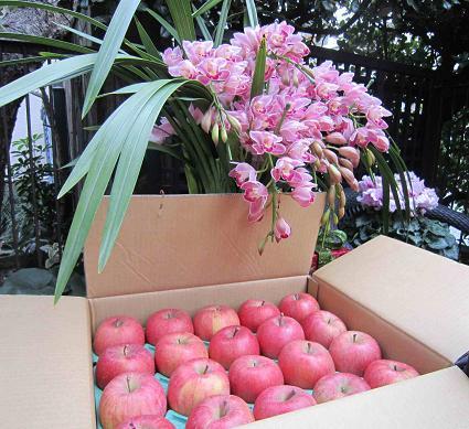 林檎が届いたよ~♪_b0177436_1234321.jpg