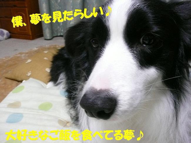 c0147241_1833742.jpg