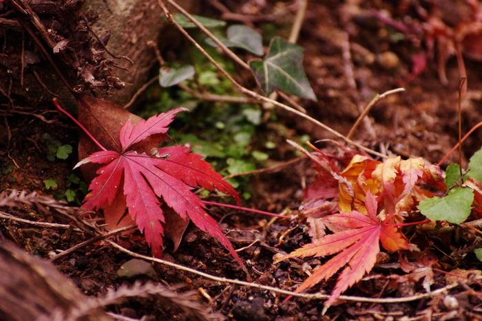 落ち葉ですが..._a0129474_14301036.jpg