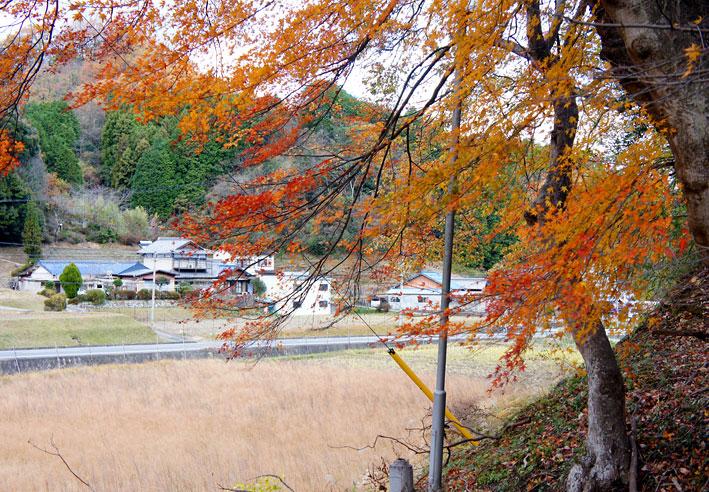 秋が行くんだ冬が来た_b0145296_7153536.jpg