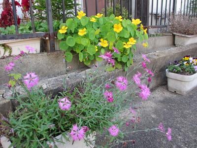いつまでも咲く花_e0150006_165574.jpg