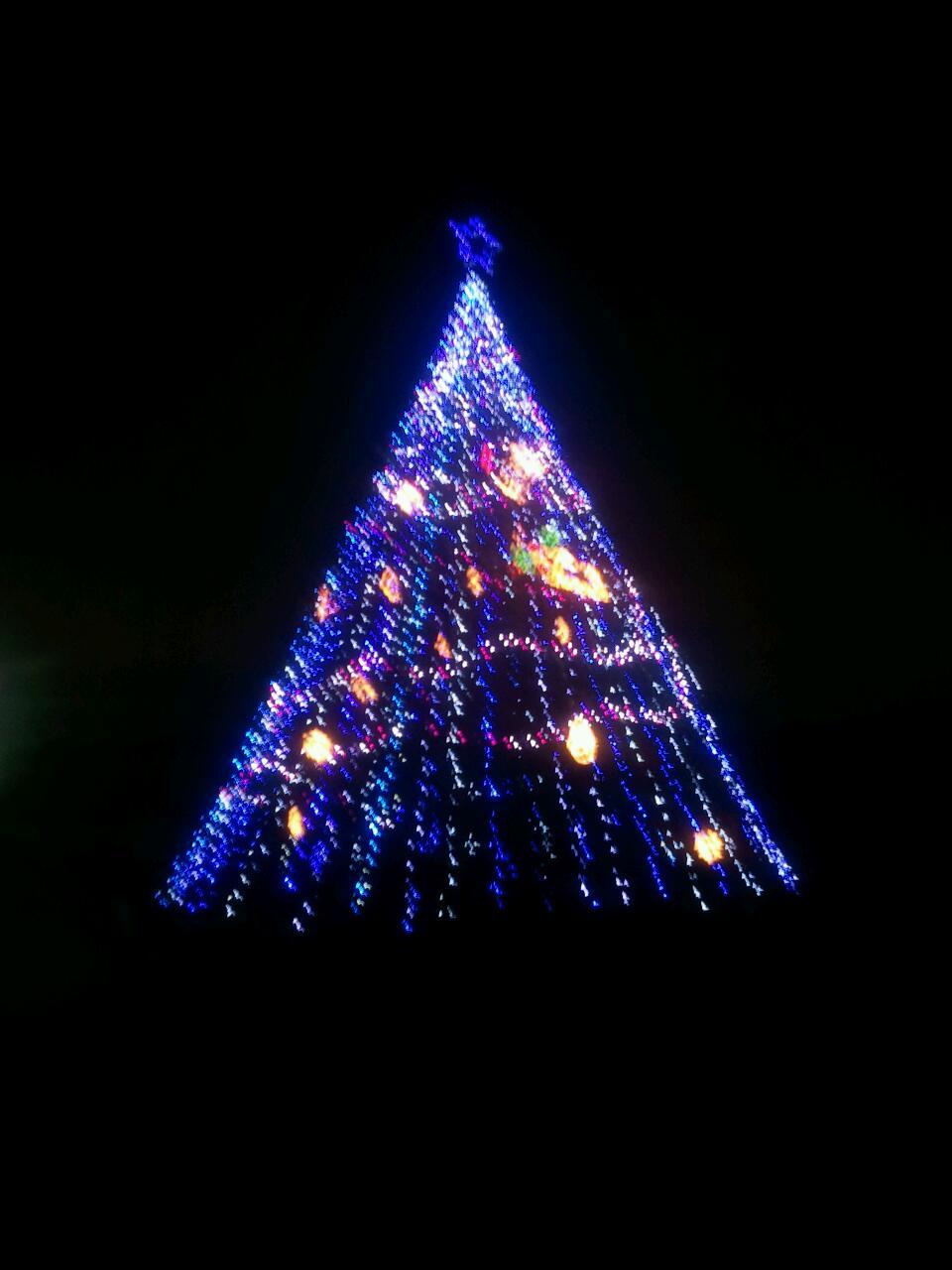 クリスマスツリー!_a0137049_12222491.jpg
