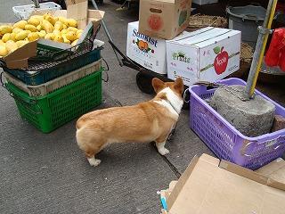 犬と猫_b0248150_222738.jpg