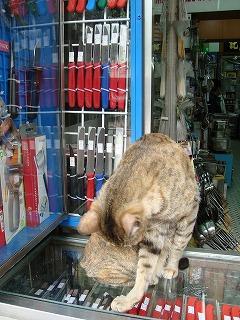 犬と猫_b0248150_2227579.jpg