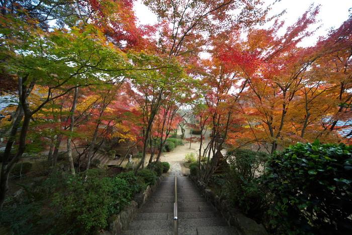 紅葉 2011 西山 勝持寺_f0021869_2345921.jpg