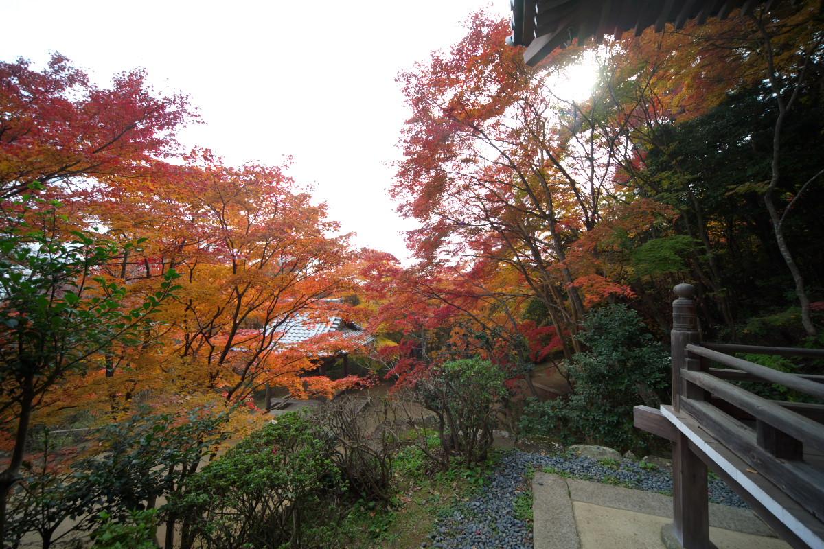 紅葉 2011 西山 勝持寺_f0021869_2355419.jpg