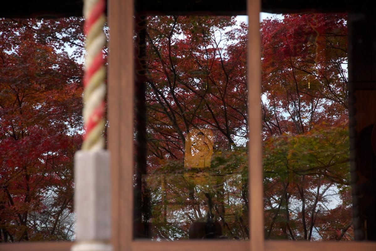 紅葉 2011 西山 勝持寺_f0021869_2374135.jpg