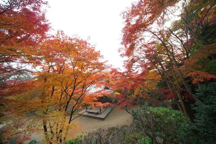 紅葉 2011 西山 勝持寺_f0021869_2381715.jpg
