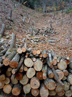 枯れ木パワー、全開!?_b0102572_9493792.jpg