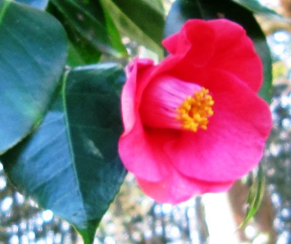 冬の庭_a0208899_14212442.jpg