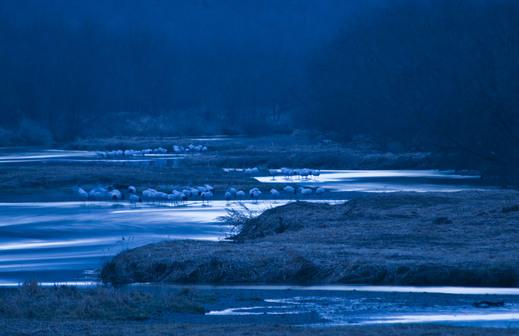 初冬の雪裡川_d0019422_20404674.jpg