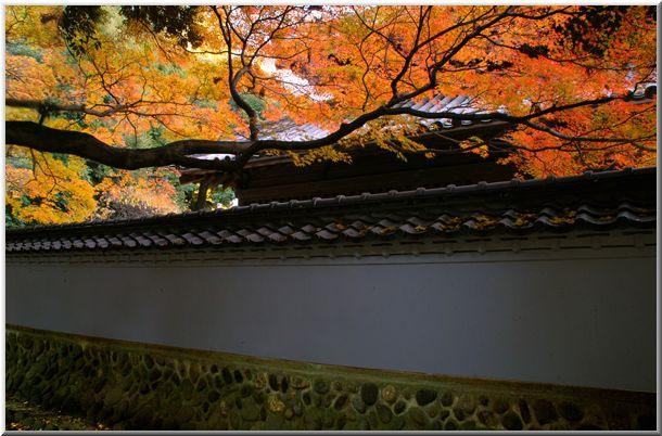 足利・佐野(栃木)の旅Ⅱ_d0123528_184291.jpg
