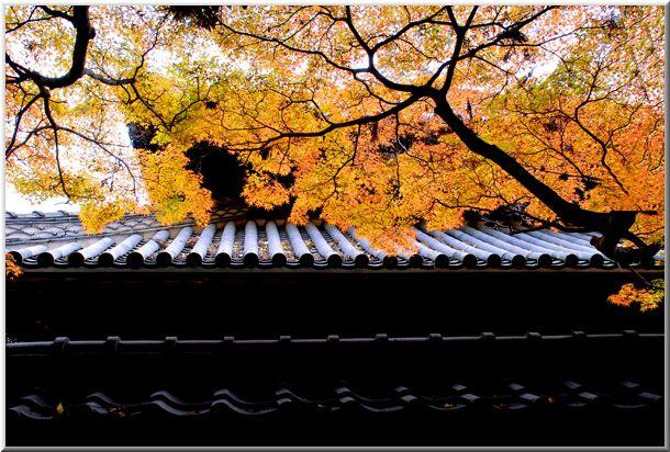 足利・佐野(栃木)の旅Ⅱ_d0123528_18473795.jpg