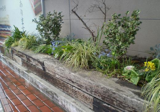 迎春の花壇になりました!_f0139333_034651.jpg