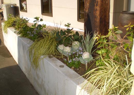 迎春の花壇になりました!_f0139333_042611.jpg
