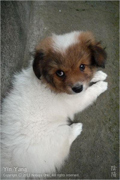 夕方の子犬、バリ島_e0139738_9315479.jpg