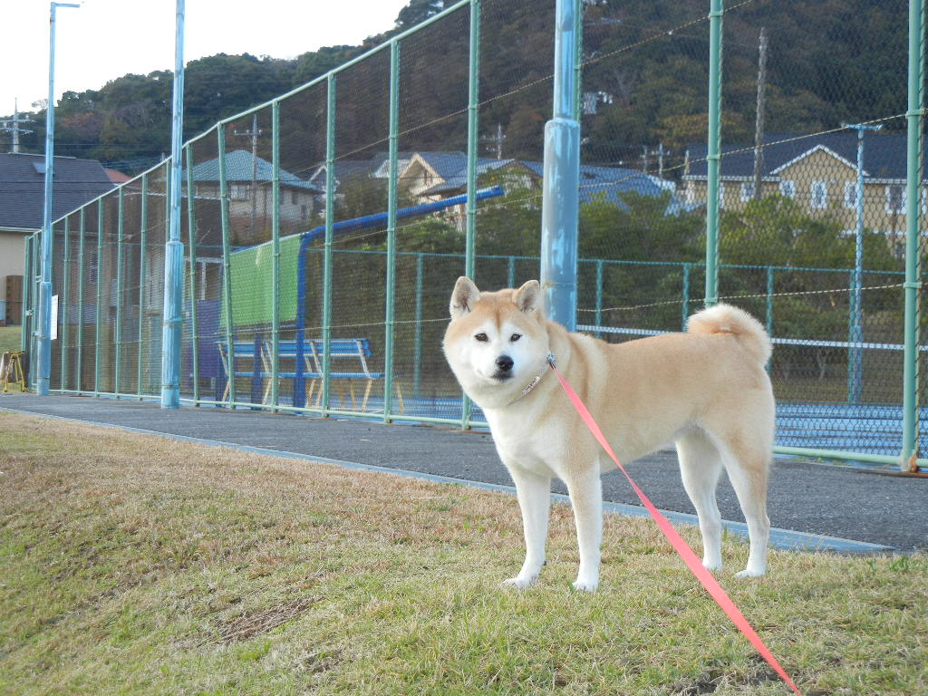 2011年12月13日(火)愛ちゃんの8歳の誕生日!_f0060461_15447100.jpg
