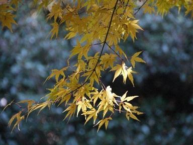 京都とはまた違う秋、新宿御苑の紅葉を見てきました_b0175688_15354212.jpg