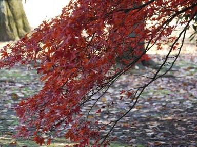 京都とはまた違う秋、新宿御苑の紅葉を見てきました_b0175688_15355933.jpg