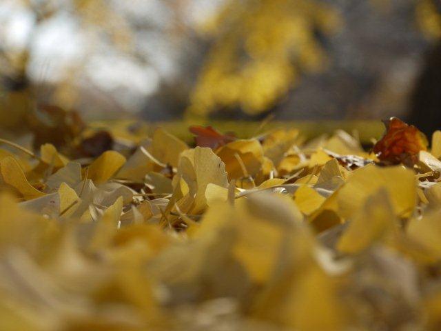 京都とはまた違う秋、新宿御苑の紅葉を見てきました_b0175688_15393155.jpg