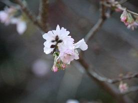 京都とはまた違う秋、新宿御苑の紅葉を見てきました_b0175688_154459100.jpg