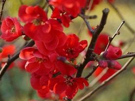 京都とはまた違う秋、新宿御苑の紅葉を見てきました_b0175688_1544985.jpg